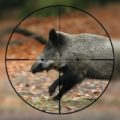 Minden a vadászatról